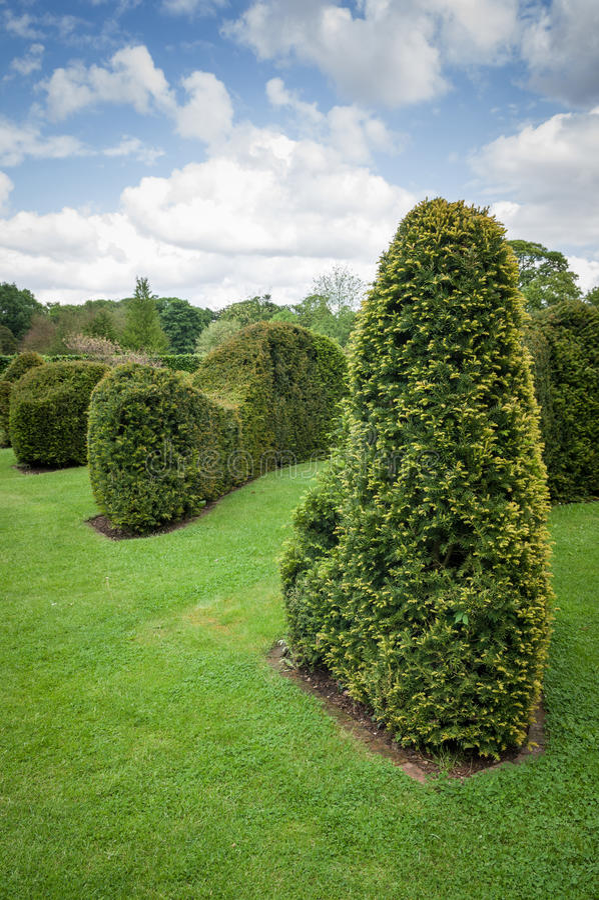 Befestigte Hecke-Topiary-getrimmte Hecke stockfotos