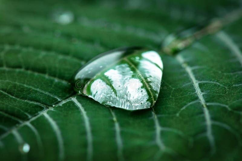 Befeuchten Sie Tropfen auf einem grünen Blatt stockfotografie