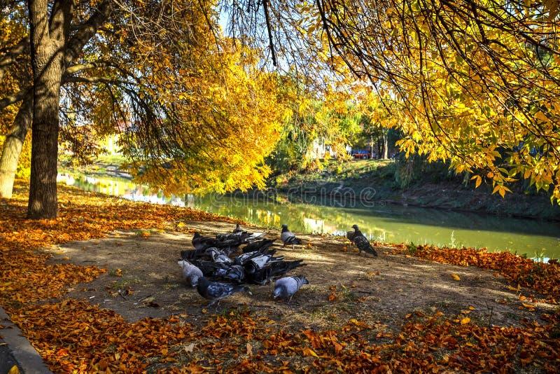 Bega River, Timisoara, Romania. Bega river shore seen on a beautiful autumn day, Timisoara, Romania stock photography