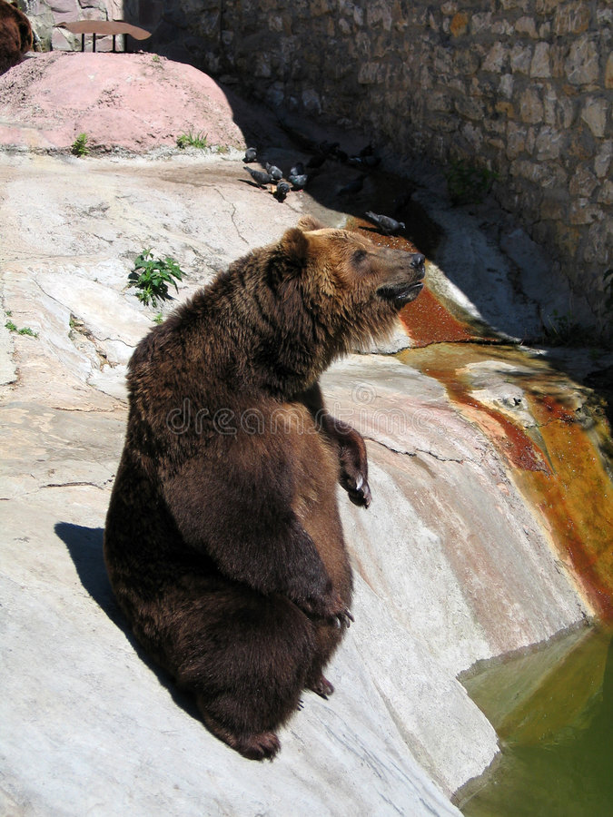 Beggar Bear stock photo