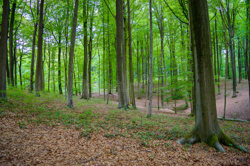 Begin autumn forest stock photography