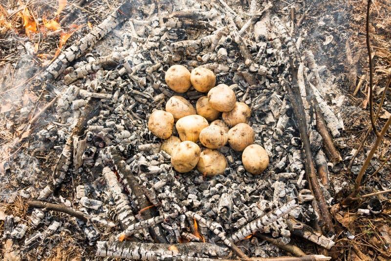 Begin Kartoffeln im Feuer kochend Kartoffeln geworfen in Asche Rest im Wald stockfotografie