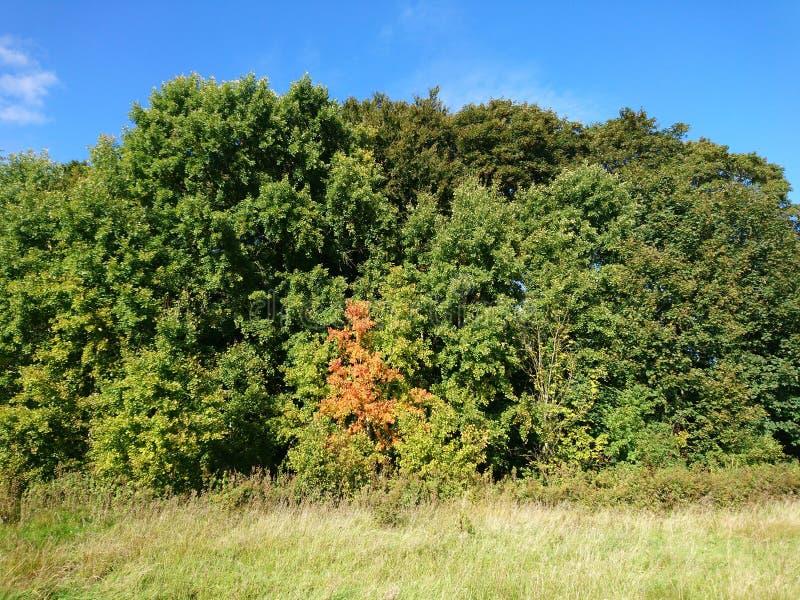 Begin van de herfst Gele bladeren op het groene gras royalty-vrije stock fotografie