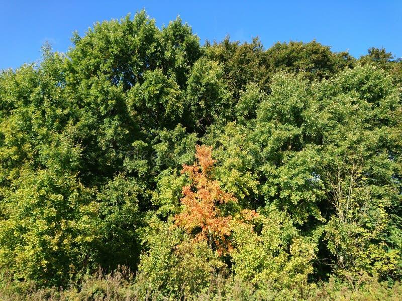 Begin van de herfst Gele bladeren op het groene gras stock foto's