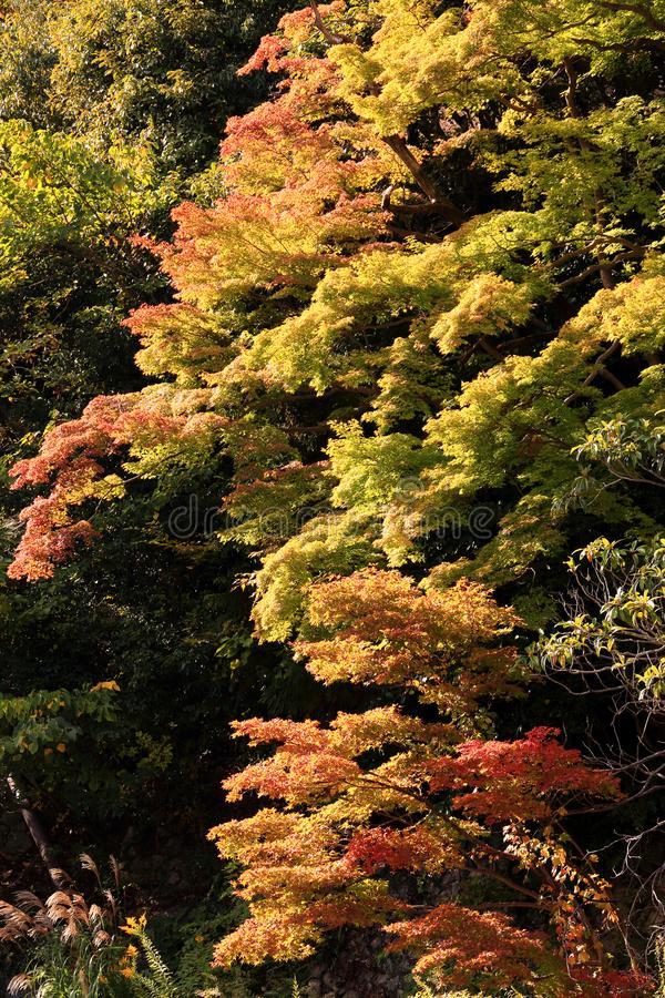 Beginn des Herbstlaubs unter Sonnenlicht stockfotos