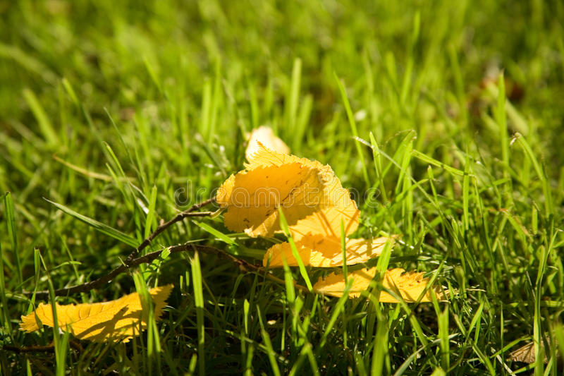 Download Beginning of autumn stock image. Image of leaf, season - 10905547