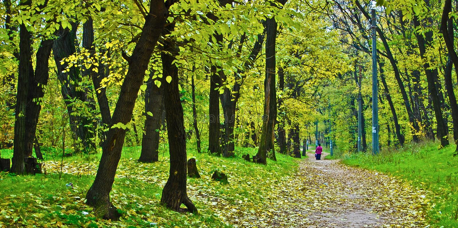In the beginning of autumn it`s a wonderful time for walking with children along the paths of the city park. royalty free stock photos