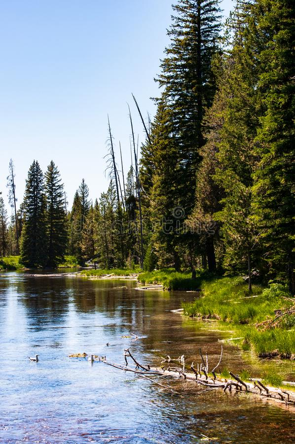 The beginning of Big Springs Idaho. The beginning of clear water from the Big Springs located in Idaho royalty free stock photos
