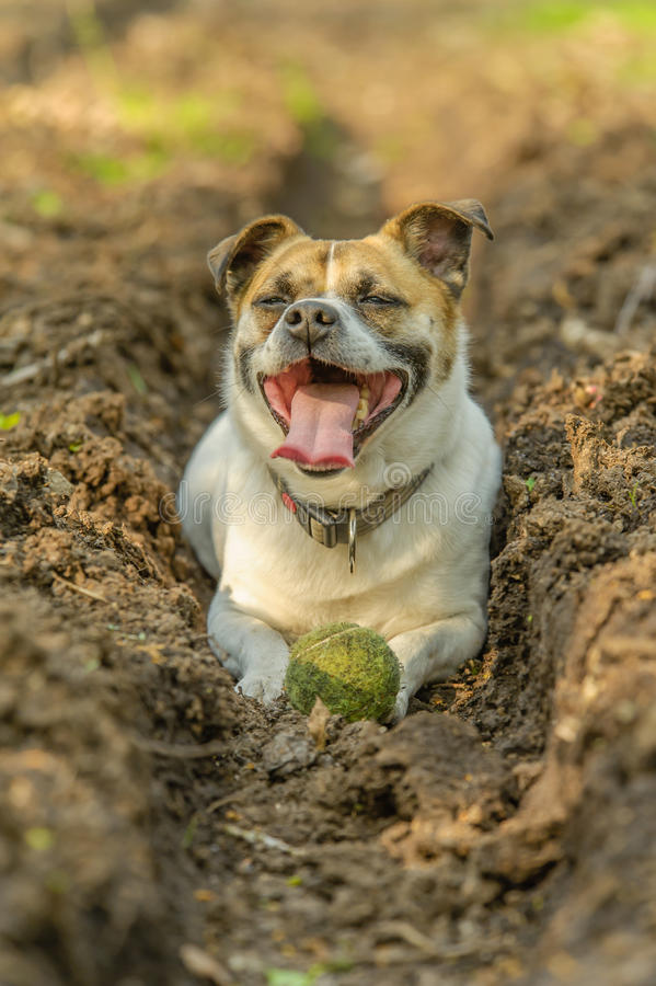 Begleiter-Tiere - Hunde lizenzfreies stockfoto