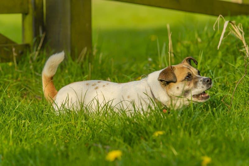 Begleiter-Tiere - Hunde lizenzfreie stockfotos