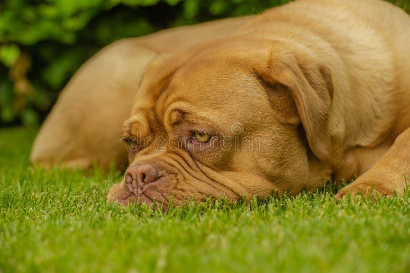 Begleiter-Tiere - Hunde lizenzfreie stockbilder