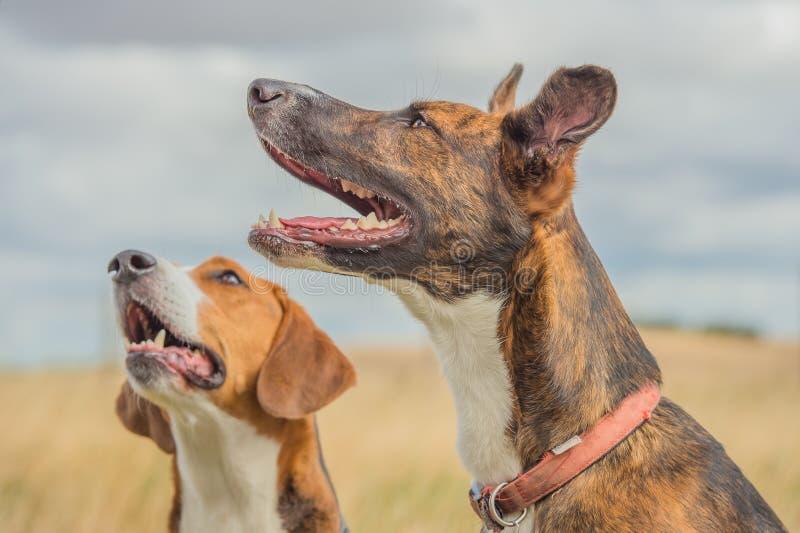 Begleiter-Tiere - Hunde stockfoto