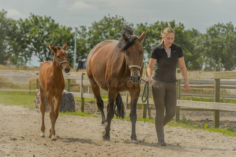 Begleiter-Tiere - Pferde stockfoto