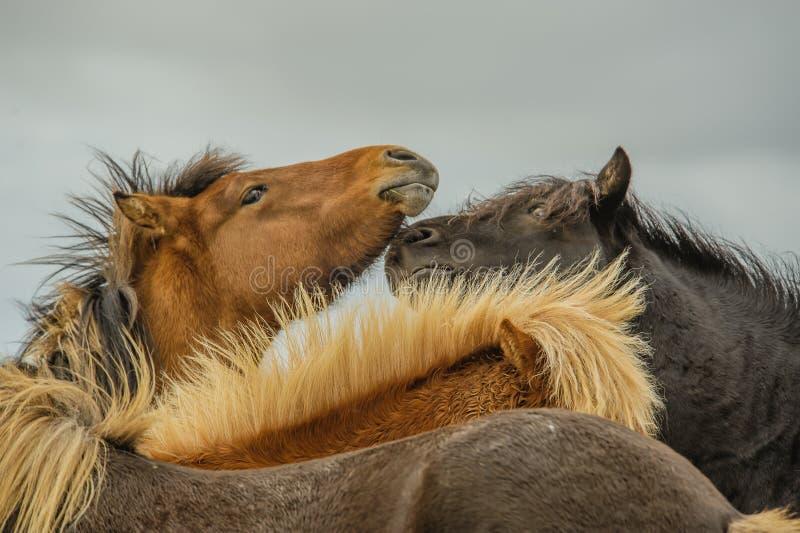 Begleiter-Tiere - Pferde lizenzfreies stockbild