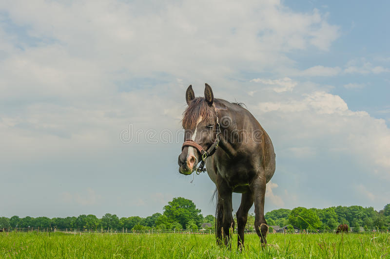 Begleiter-Tiere - Pferde stockbild