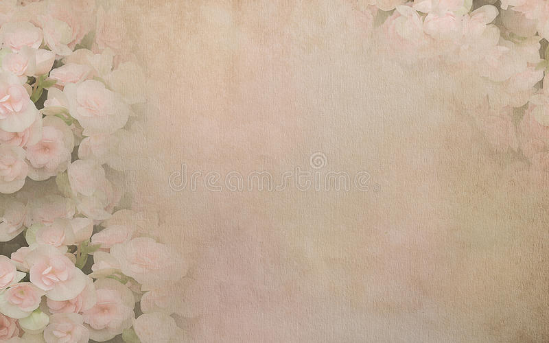 Begonia flower on vintage paper background stock images