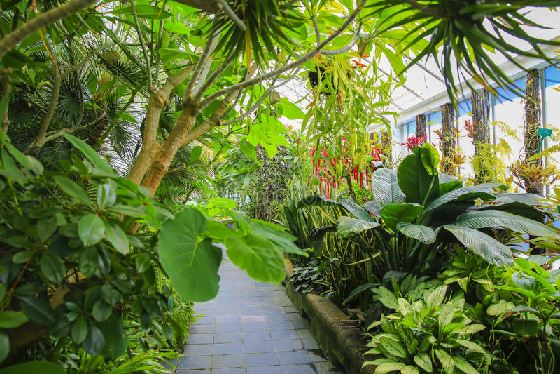 Begonia house interior, Wellington Botanical Garden, New Zealand. Botanical glass house of Begonia House in Wellington Botanical garden , New Zealand royalty free stock images