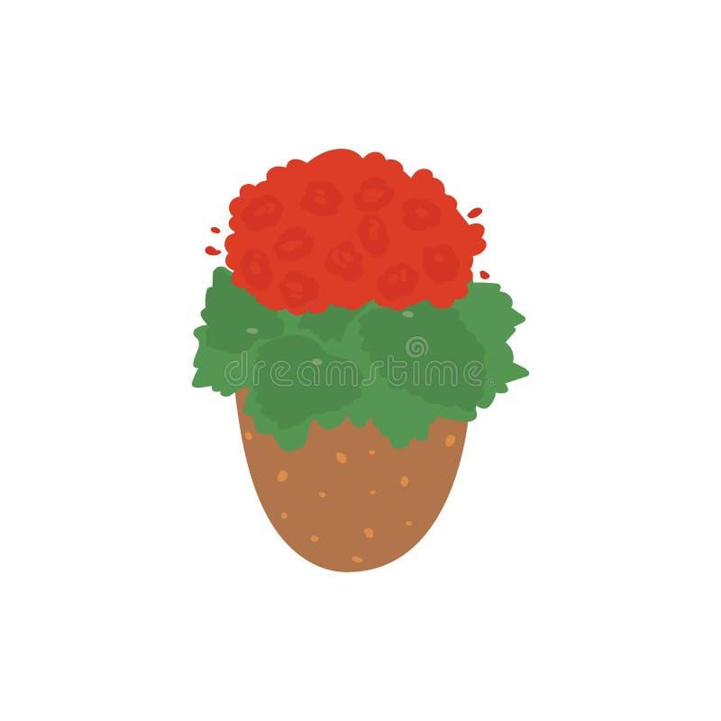 begonia Planta de tiesto Houseplant aislado en el fondo blanco Ejemplo del vector en plano a mano libre illustration