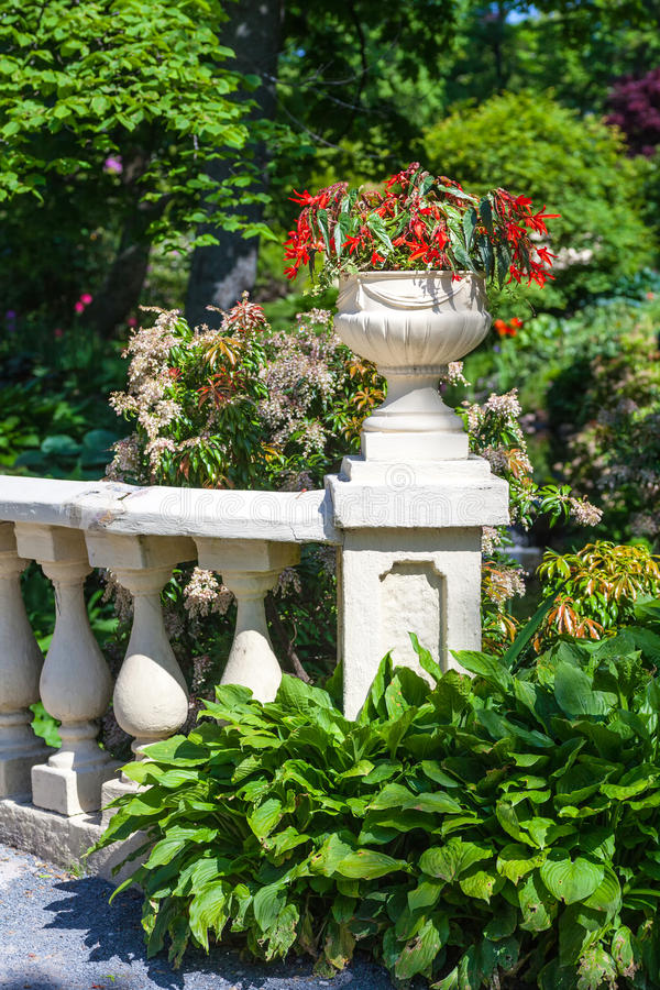 Begonia Planter fotografia stock libera da diritti
