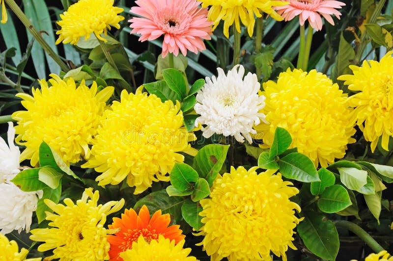 Begräbnis- Blumen für Beileid stockfoto