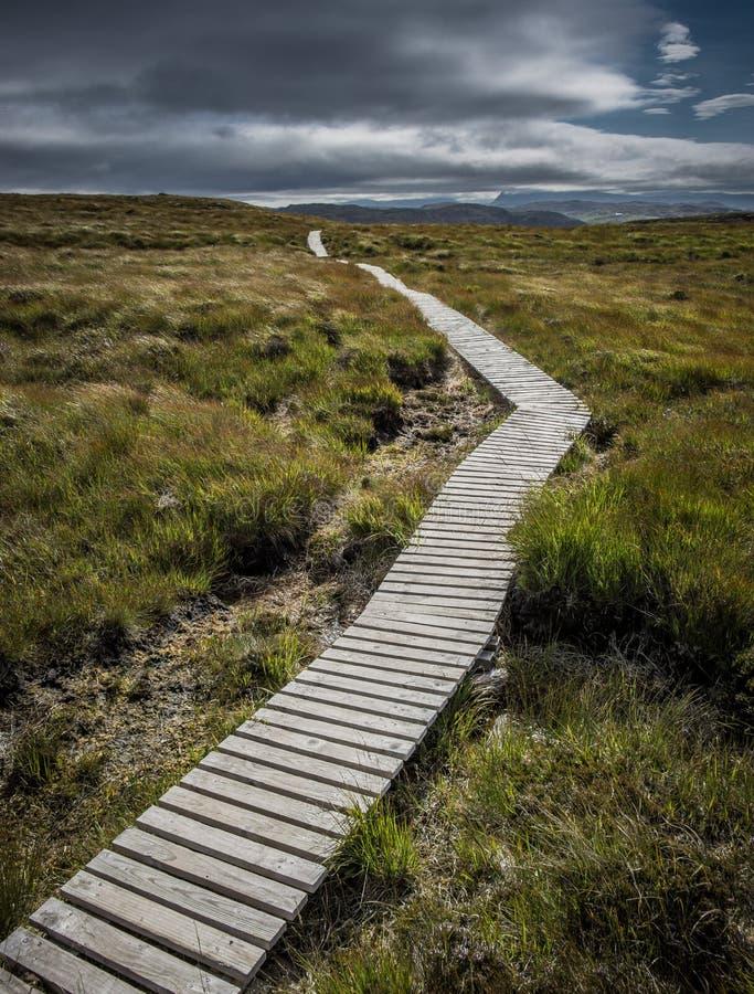 Begränsa träbanan upp en kulle i Skottland royaltyfria bilder