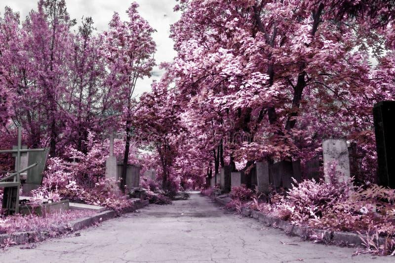 Begraafplaats in infrarode kleur royalty-vrije stock afbeelding