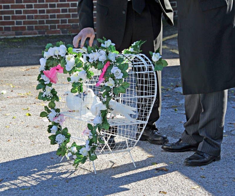 Begravnings- hjärtaduvor arkivfoton