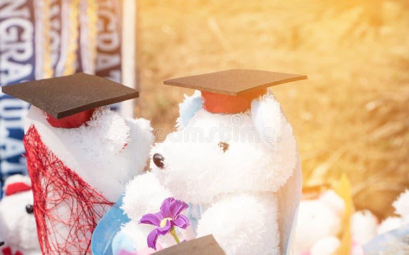 Begrepp av den internationella doktorand- studien, avläggande av examensvartlock på nallebjörnen som tillbaka bär hatten på utomh royaltyfri bild