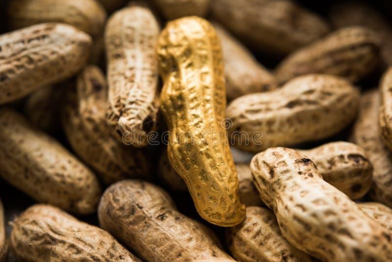 Begrepp av egenart, lycka, värde, exclusivity och bättre val Guld- jordnöt- eller jordningsmutter som ut står bland normal peanu arkivfoto