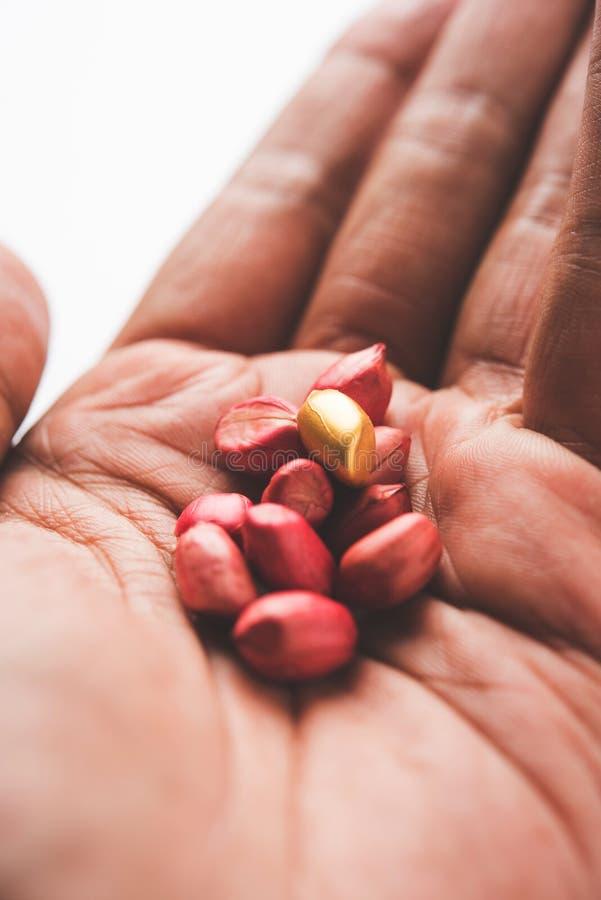 Begrepp av egenart, lycka, värde, exclusivity och bättre val Guld- jordnöt- eller jordningsmutter som ut står bland normal peanu royaltyfri bild