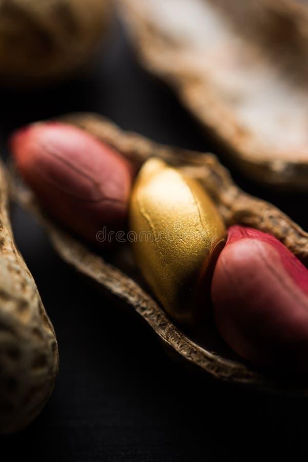 Begrepp av egenart, lycka, värde, exclusivity och bättre val Guld- jordnöt- eller jordningsmutter som ut står bland normal peanu royaltyfri fotografi