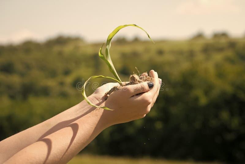Begrepp av ekologi, miljöskydd arkivfoton