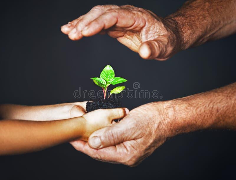 Begrepp av familjen Händer av fadern och barnet rymmer en grön växt royaltyfri fotografi