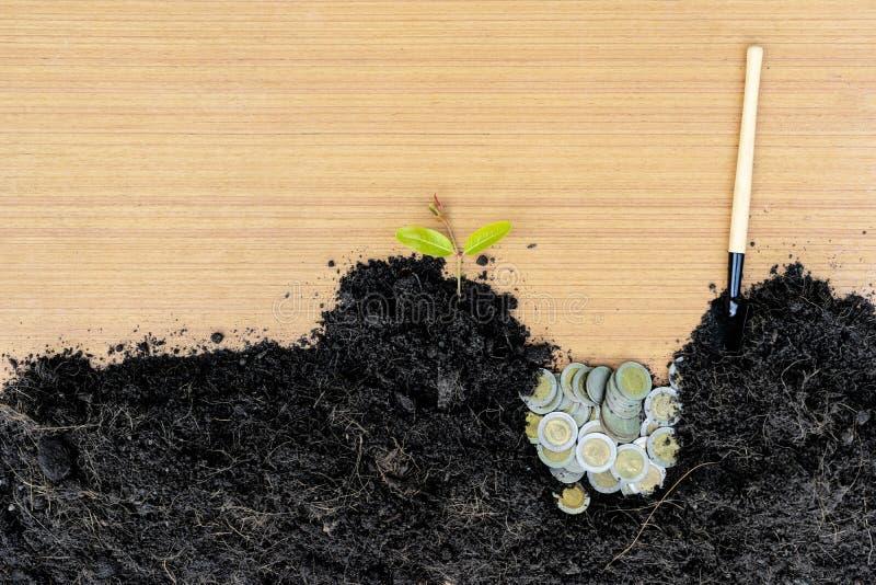 Begrepp av finans, investering, affärstillväxt, genom att gödsla träd in i mynt arkivbild