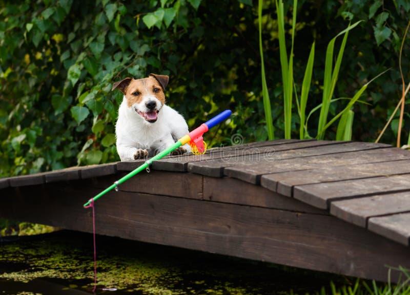 Begrepp av fiske för nybörjare och attrapper med hunden och stången arkivfoto