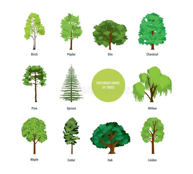 Begrepp av samlingen av moderna olika sorter av träd royaltyfri illustrationer