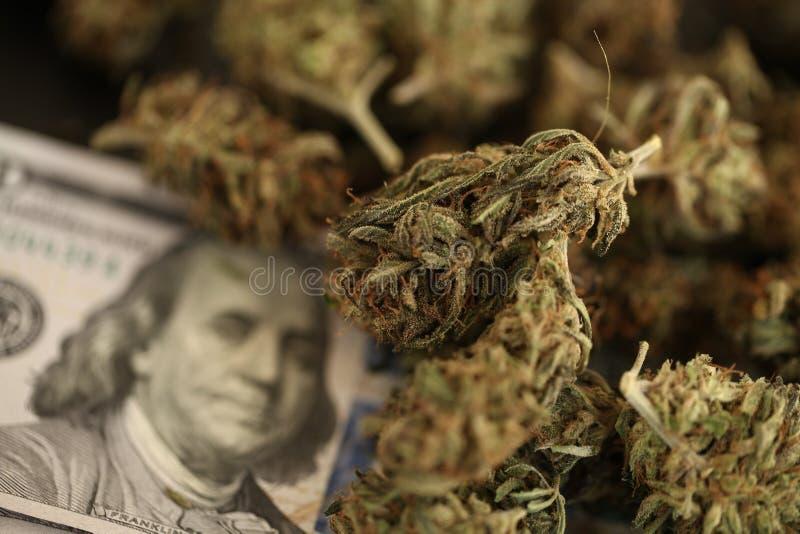 Begrepp för cannabisaffärshampa Medicinsk marijuana och pengar royaltyfri foto