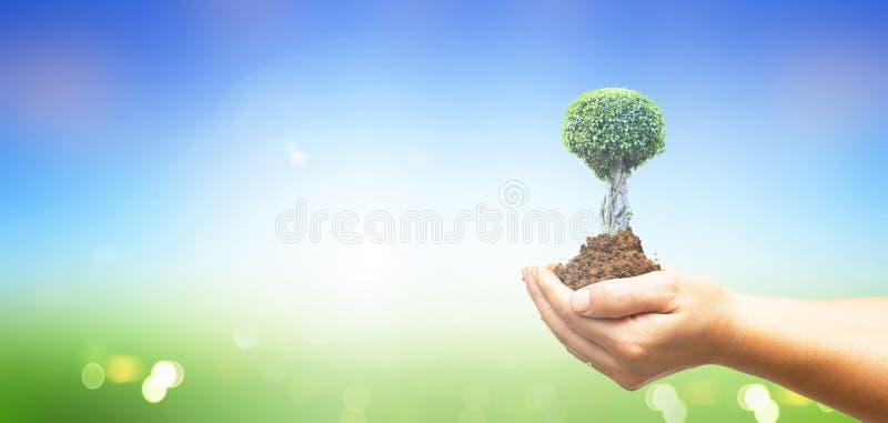 Begrepp för dag för världsmiljö: Människan räcker det hållande stora trädet över grön skogbakgrund royaltyfri foto