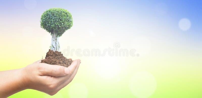 Begrepp för dag för världsmiljö: Människan räcker det hållande stora trädet över grön skogbakgrund arkivbilder