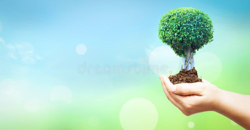 Begrepp för dag för världsmiljö: Mänskliga händer som rymmer det stora trädet över bakgrund för blå himmel arkivfoton