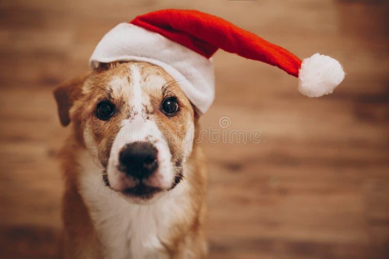 Begrepp för glad jul och för lyckligt nytt år gullig hund i santa mummel fotografering för bildbyråer