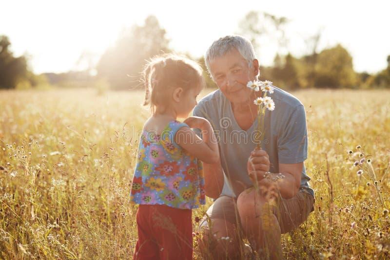 Begrepp för sommartid Det älskvärda lilla kvinnliga barnet spenderar tid med hennes gråa haired mogna farfar, väljer upp kamomill arkivbild