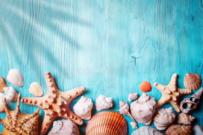 Begrepp för sommartid med snäckskal och sjöstjärnan på blåa träbräden Vila på stranden Bakgrund med kopieringsutrymme royaltyfri foto