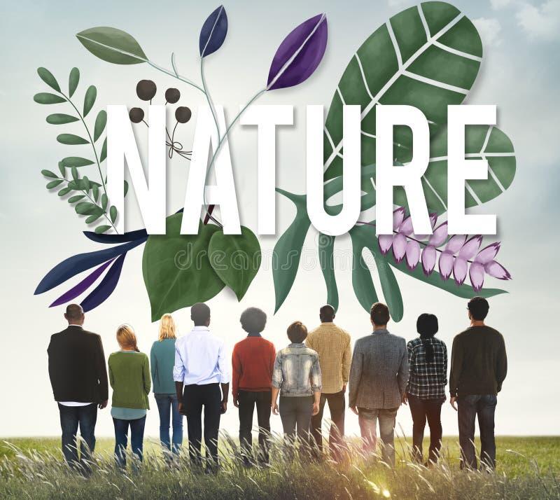 Begrepp för tillväxt för grön jord för naturmiljö naturligt arkivfoto