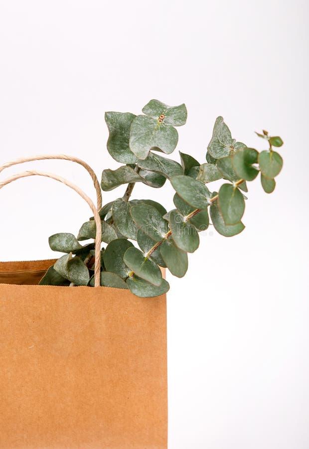 Begrepp för vår för bakgrund för växter Kraft för brunt papper inre vitt arkivfoton
