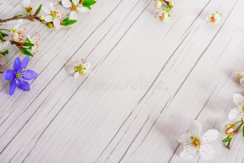 Begrepp för vårtid, påsk, blommabakgrund arkivbild