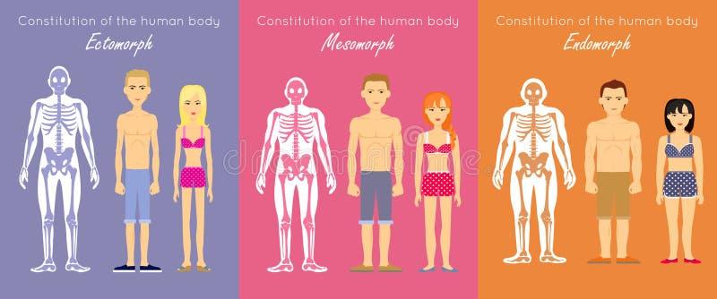 Begrepp för vektor för design för människokroppkonstitutionlägenhet royaltyfri illustrationer
