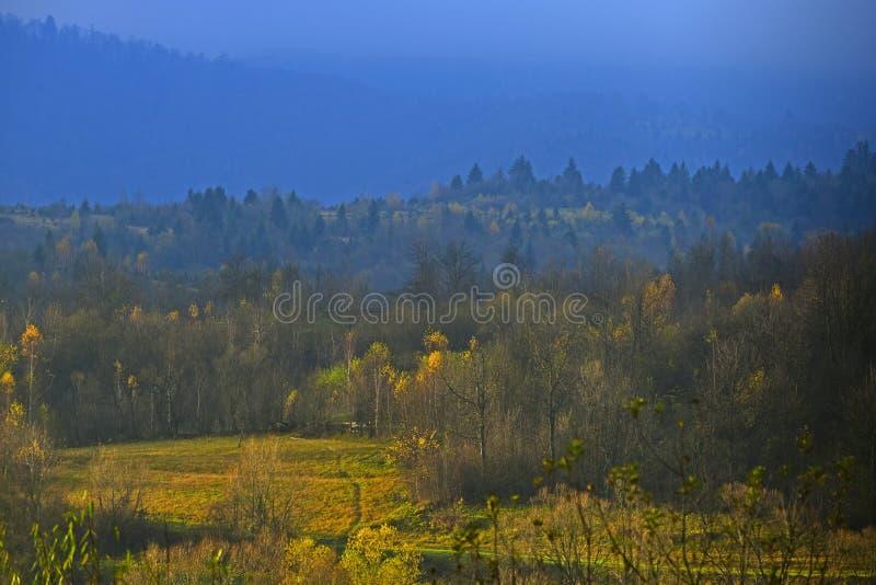 Begrepp f?r bergskoglandskap Dimmig himmel ovanf?r skoglandskap royaltyfria bilder