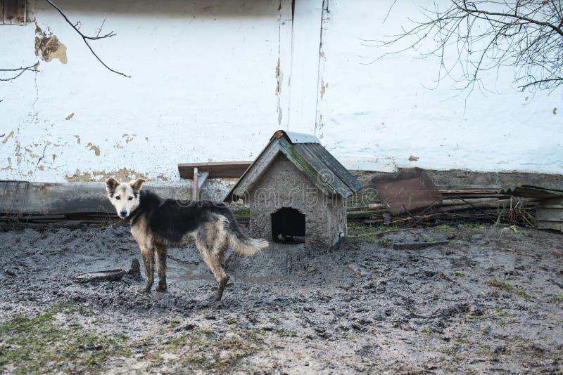 Begrepp - hundliv Hund på koppeln, träsk under foten, Ukraina royaltyfri foto