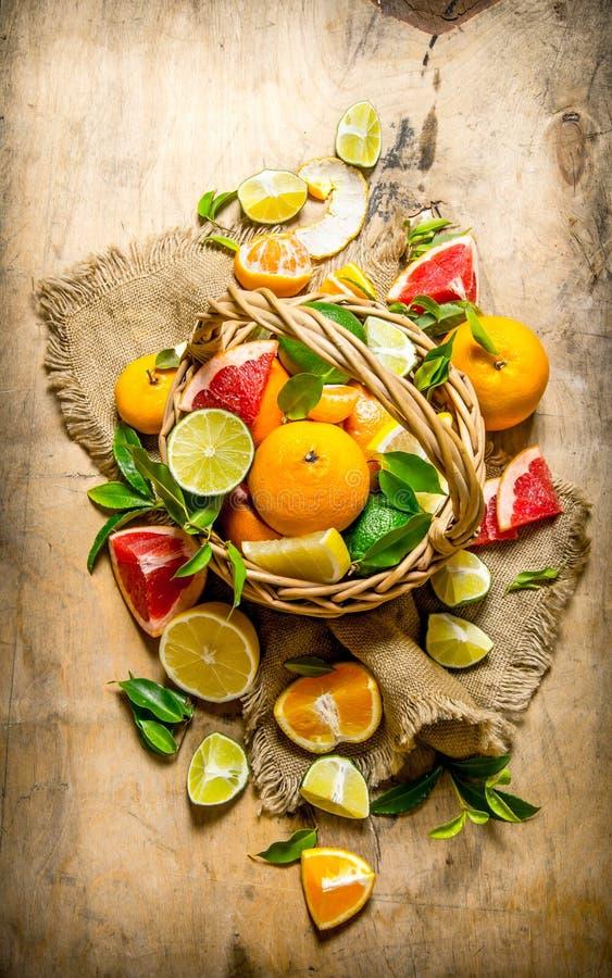 Begreppet av citruns Korg av citrusfrukter - grapefrukt, apelsin, tangerin, citron, limefrukt arkivbilder